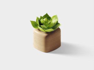 Succulent.